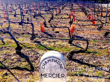 Cave Mercier s1 11